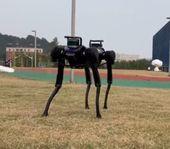 Robot Anjing Ini Dijatuhkan Berkali-kali, Ia Terus Bangkit Berkali-kali